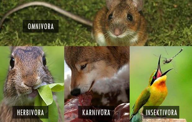 75 Gambar Hewan Insektivora Gratis Terbaru